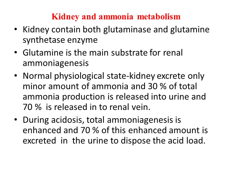 Kidney and ammonia metabolism Kidney contain both glutaminase and glutamine synthetase enzyme Glutamine is the main substrate for renal ammoniagenesis