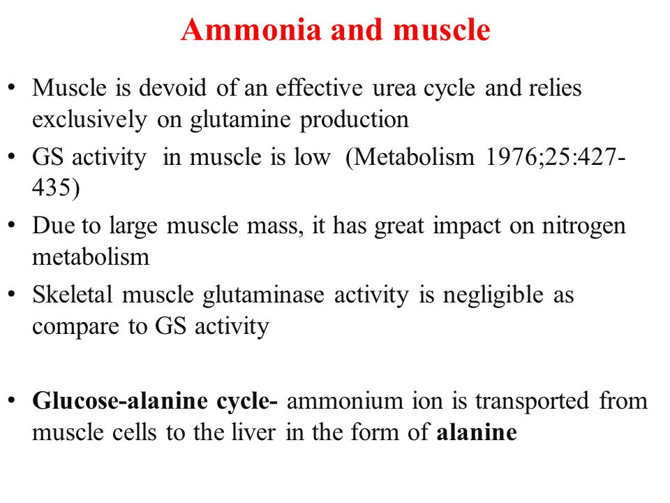 Ammonia and muscle Muscle is devoid of an effective urea cycle and relies exclusively on glutamine production GS activity in muscle is low (Metabolism