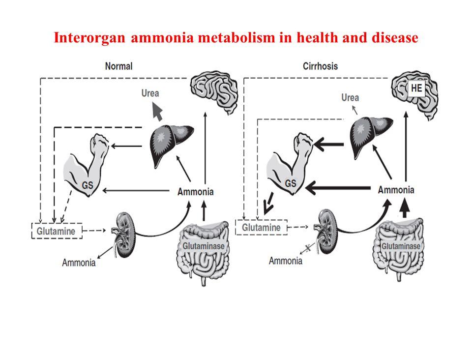 Interorgan ammonia metabolism in health and disease