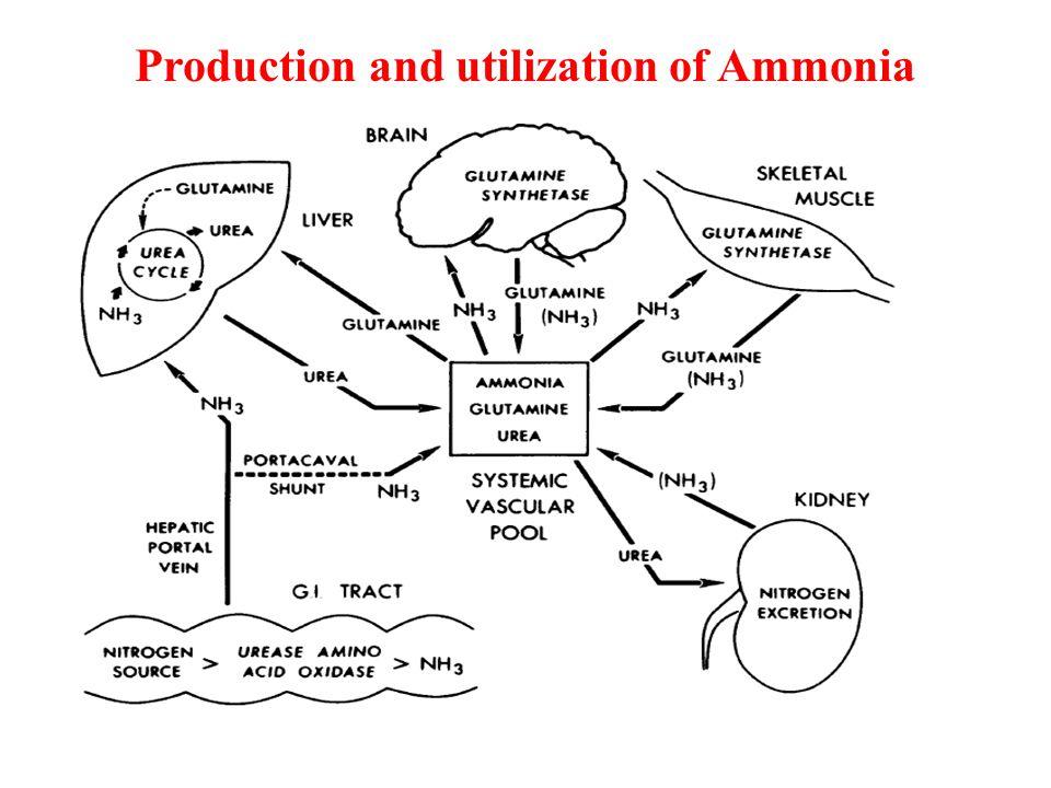 Results ALF pigs develop hyperammonemia and incresed glutamine level whereas glutamate levels were decreased.