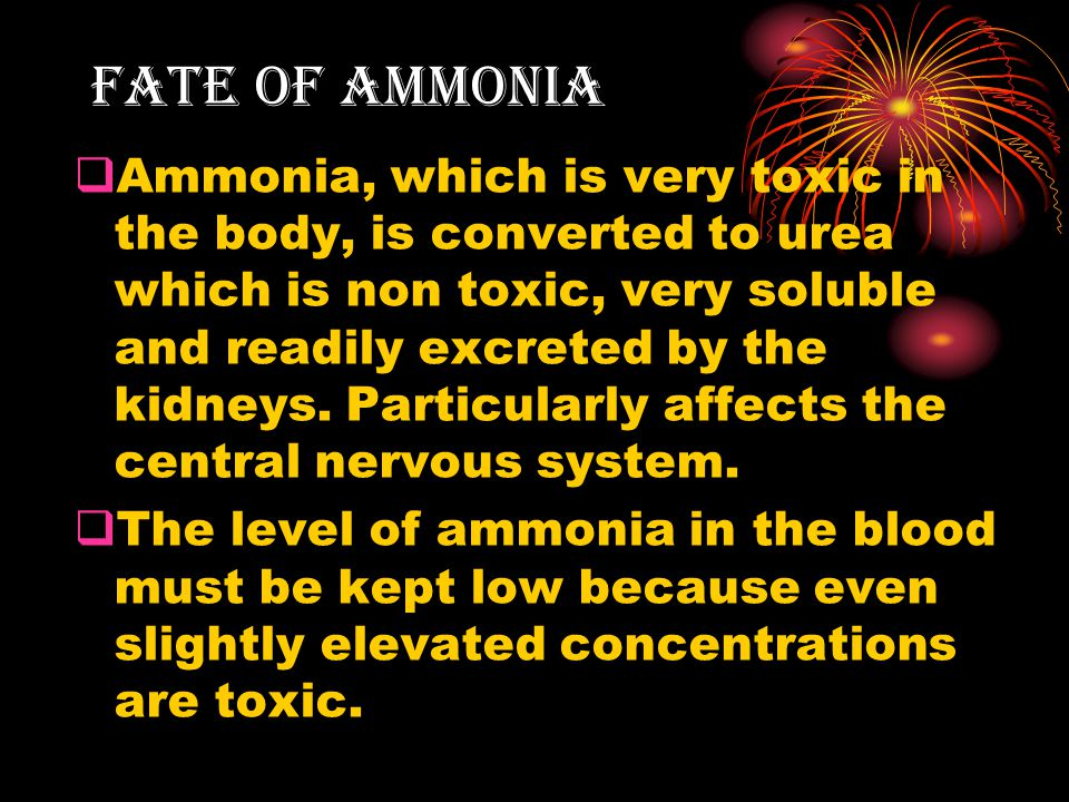 Fate of Ammonia  Ammonia, which is very toxic in the body, is converted to urea which is non toxic, very soluble and readily excreted by the kidneys.