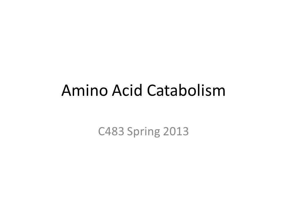 Amino Acid Catabolism C483 Spring 2013