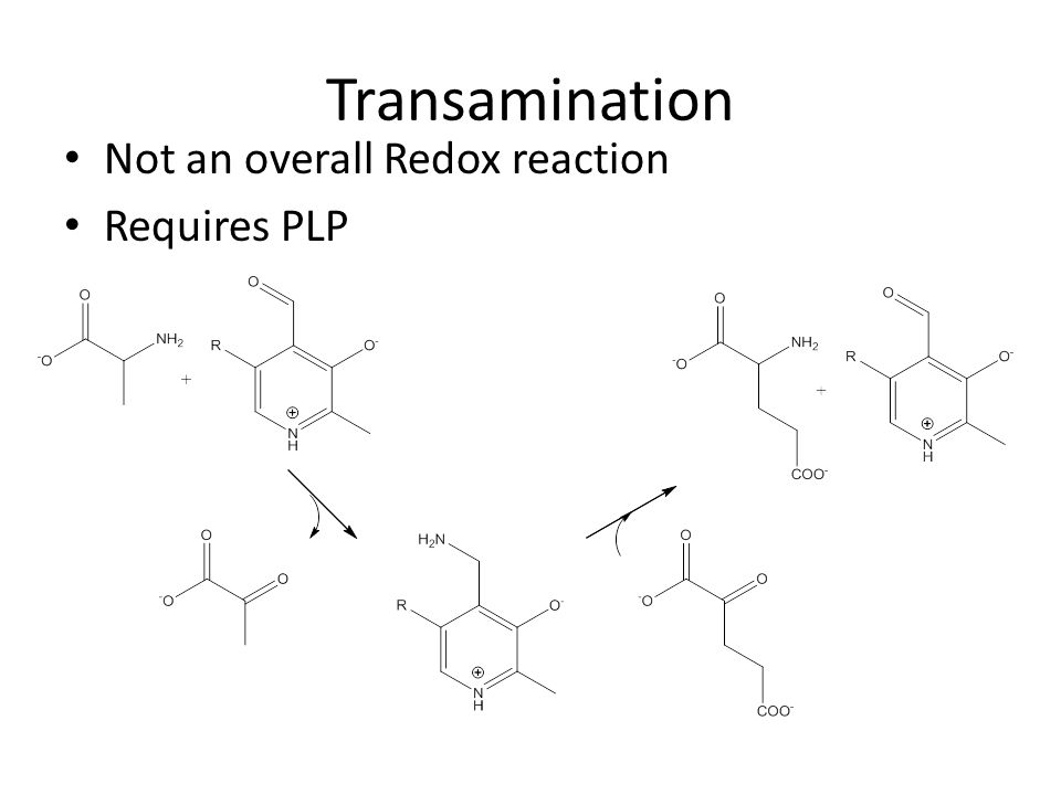 Transamination Not an overall Redox reaction Requires PLP