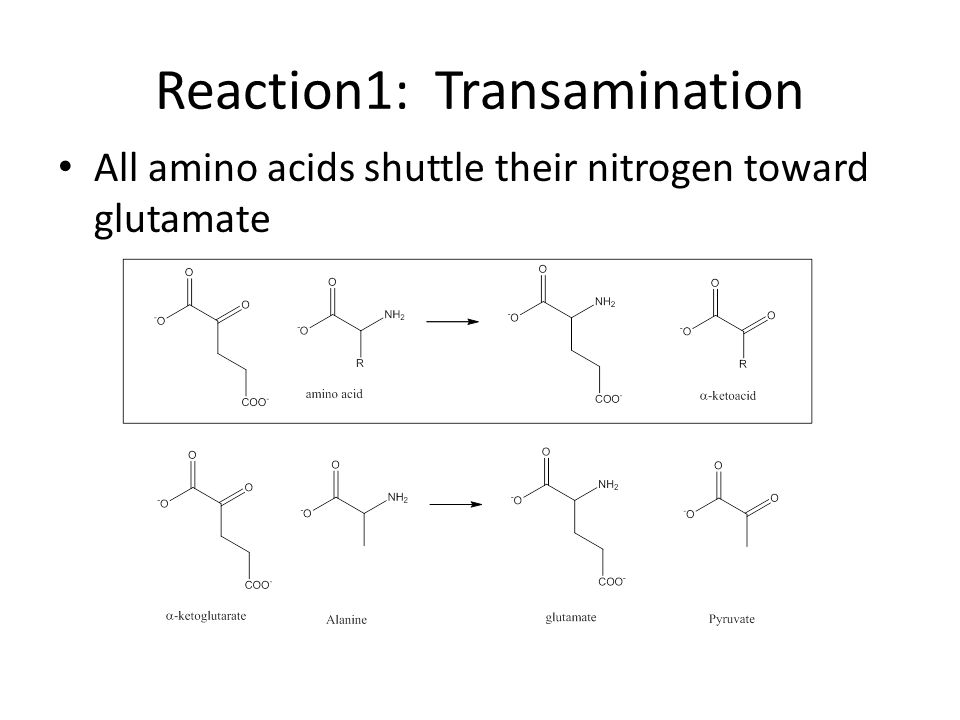 Reaction1: Transamination All amino acids shuttle their nitrogen toward glutamate