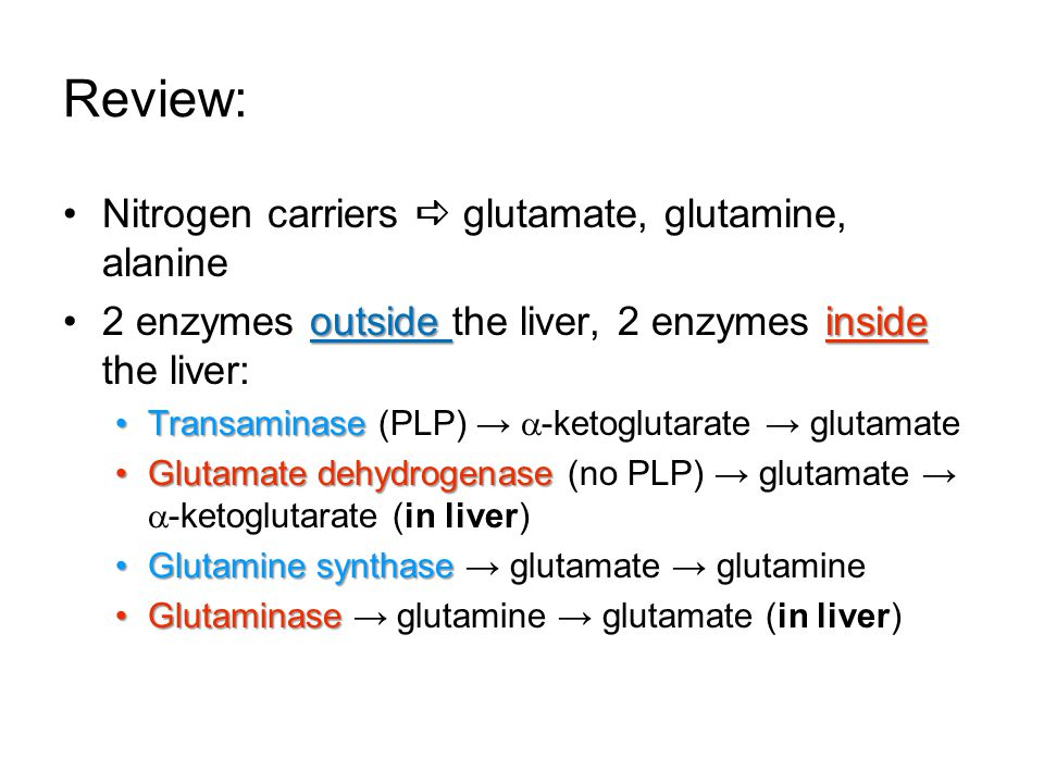 Review: Nitrogen carriers  glutamate, glutamine, alanine outside inside2 enzymes outside the liver, 2 enzymes inside the liver: TransaminaseTransamin