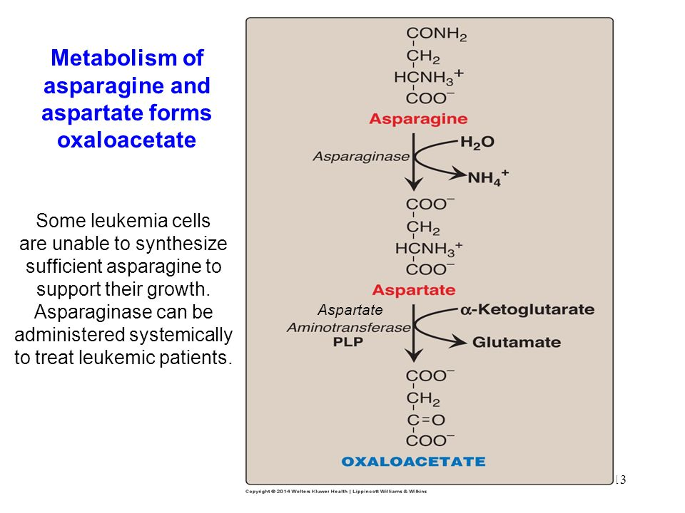 13 Metabolism of asparagine and aspartate forms oxaloacetate Some leukemia cells are unable to synthesize sufficient asparagine to support their growth.