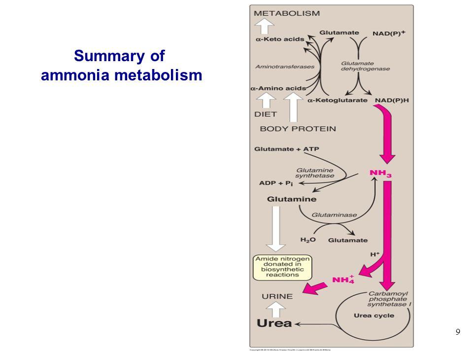9 Summary of ammonia metabolism