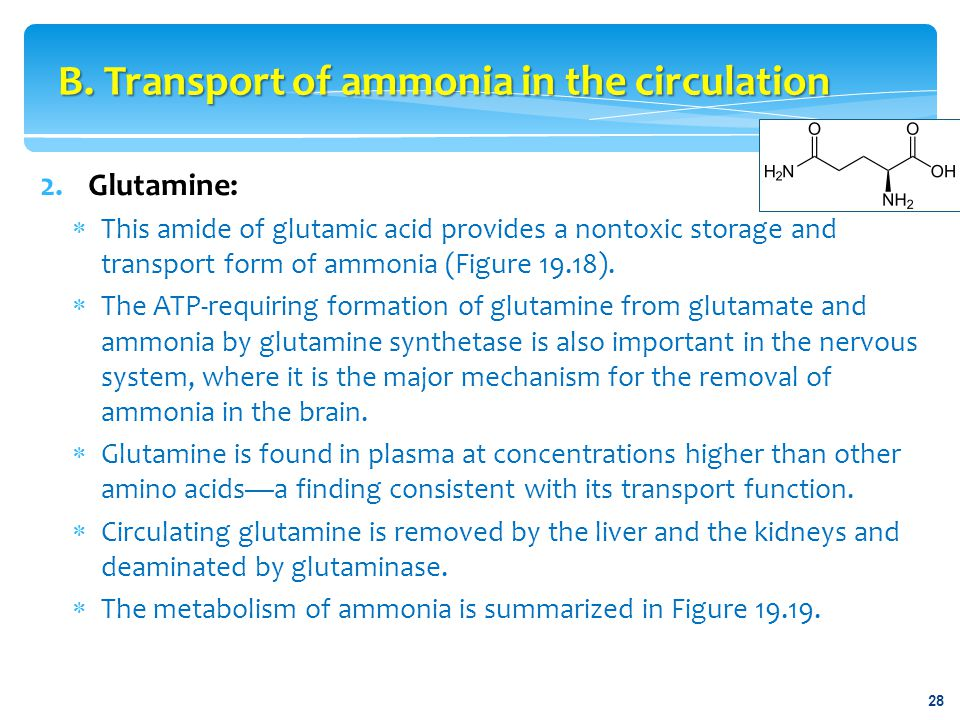 2.Glutamine:  This amide of glutamic acid provides a nontoxic storage and transport form of ammonia (Figure 19.18).  The ATP-requiring formation of