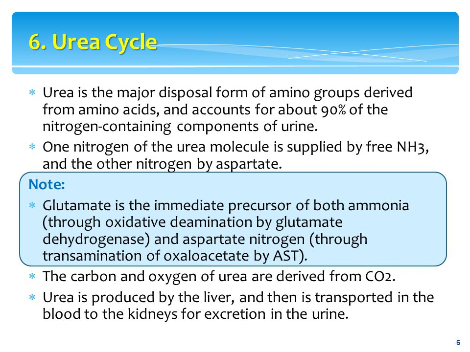  Although ammonia is constantly produced in the tissues, it is present at very low levels in blood.