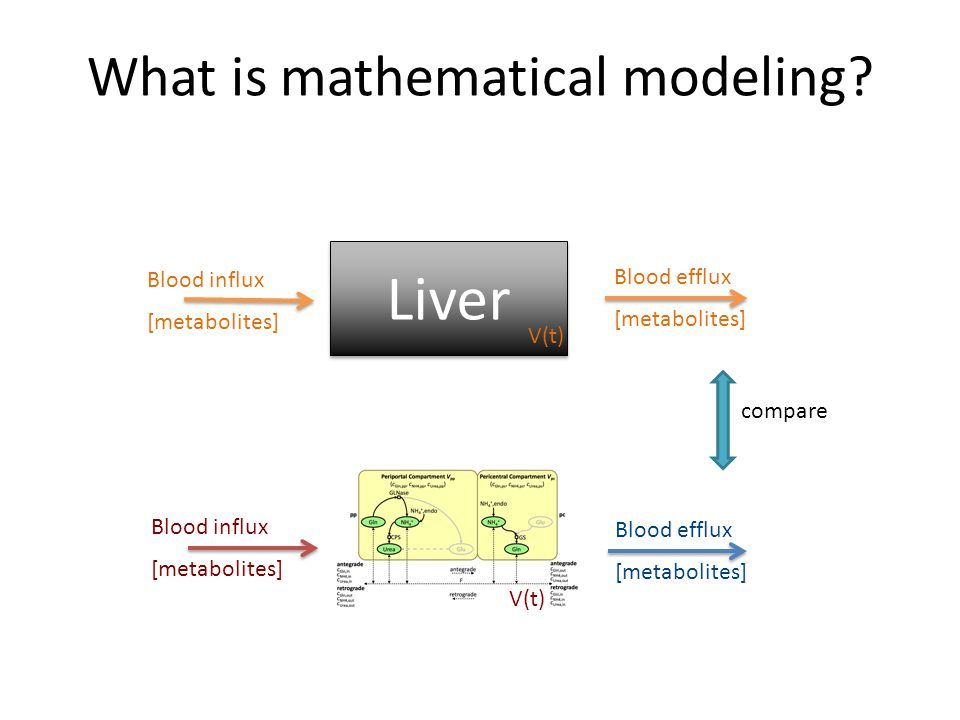 Blood efflux [metabolites] Blood influx [metabolites] Blood efflux [metabolites] Blood influx [metabolites] What is mathematical modeling.
