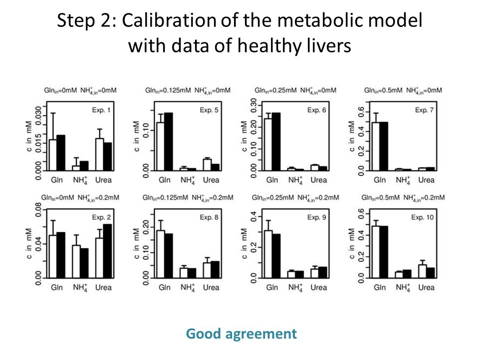 Step 2: Calibration of the metabolic model with data of healthy livers Good agreement