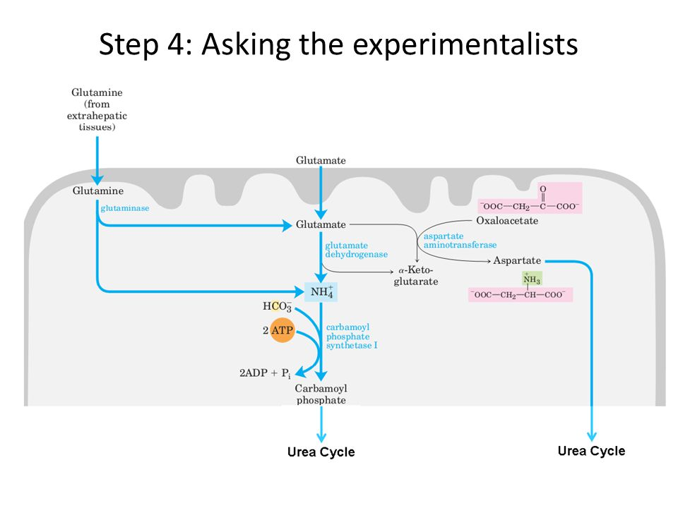 Step 4: Asking the experimentalists