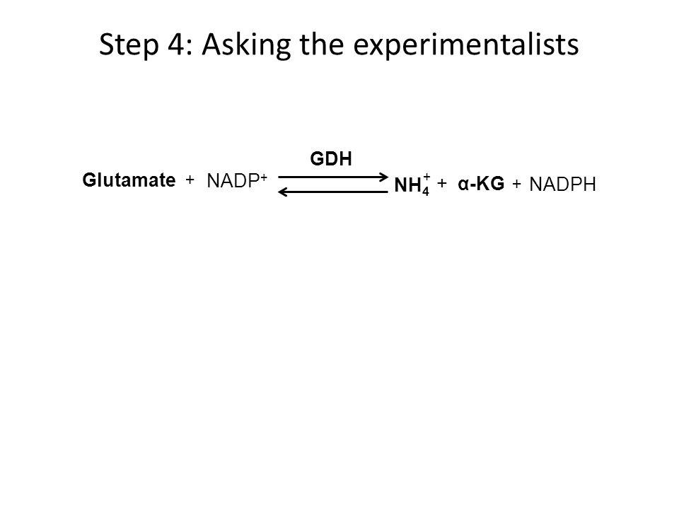 Glutamate GDH NH 4 α-KG+ + NADPH NADP + + +