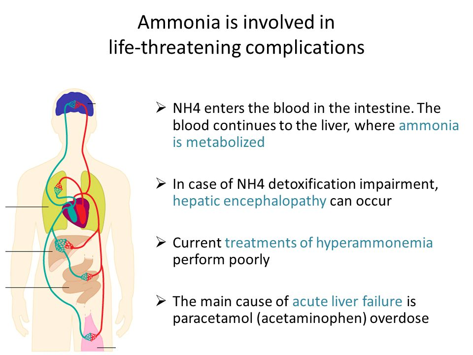 Ammonia is involved in life-threatening complications  NH4 enters the blood in the intestine.