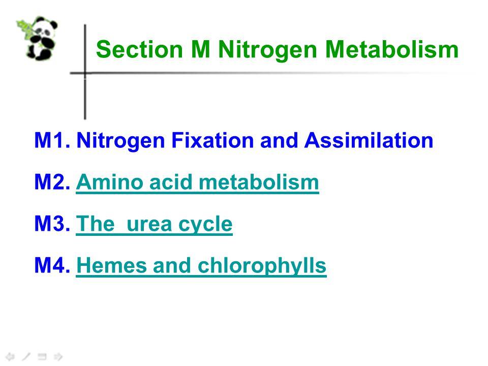 Urea cycle 5