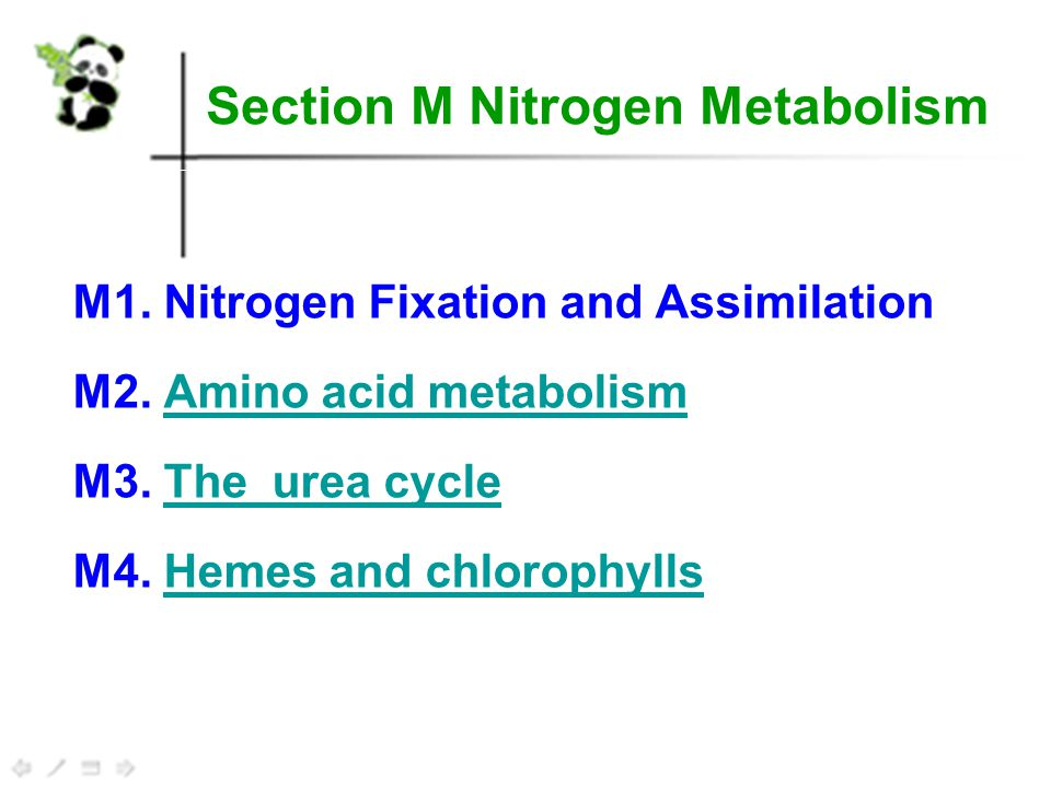 The urea cycle 1.Ammonia excretion 2.The urea cycle 3.
