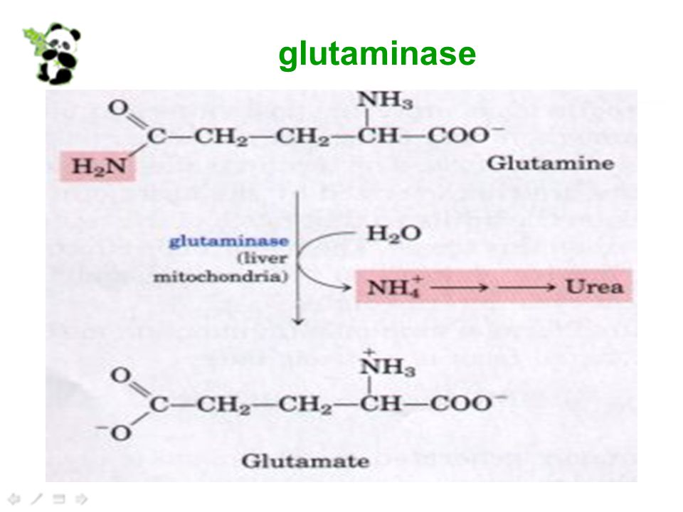 glutaminase
