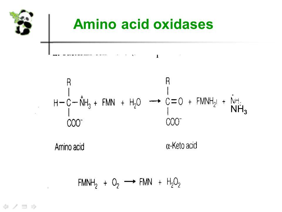 Amino acid oxidases NH 3