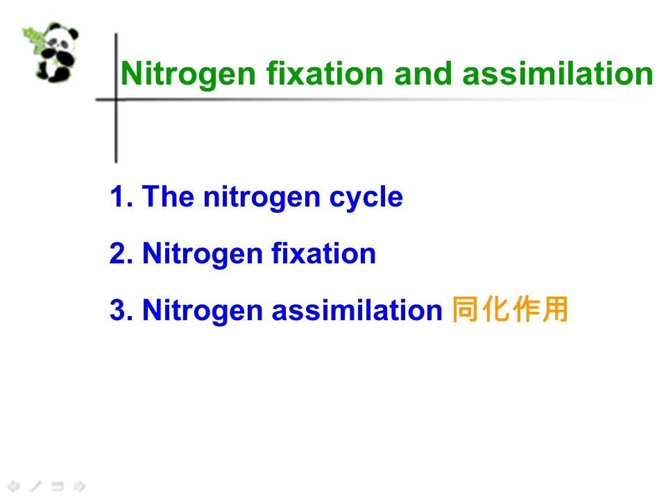 The nitrogen cycle The nitrogen cycle is the movement of nitrogen through the food chain from simple inorganic compounds, mainly ammonia, to complex organic compounds.