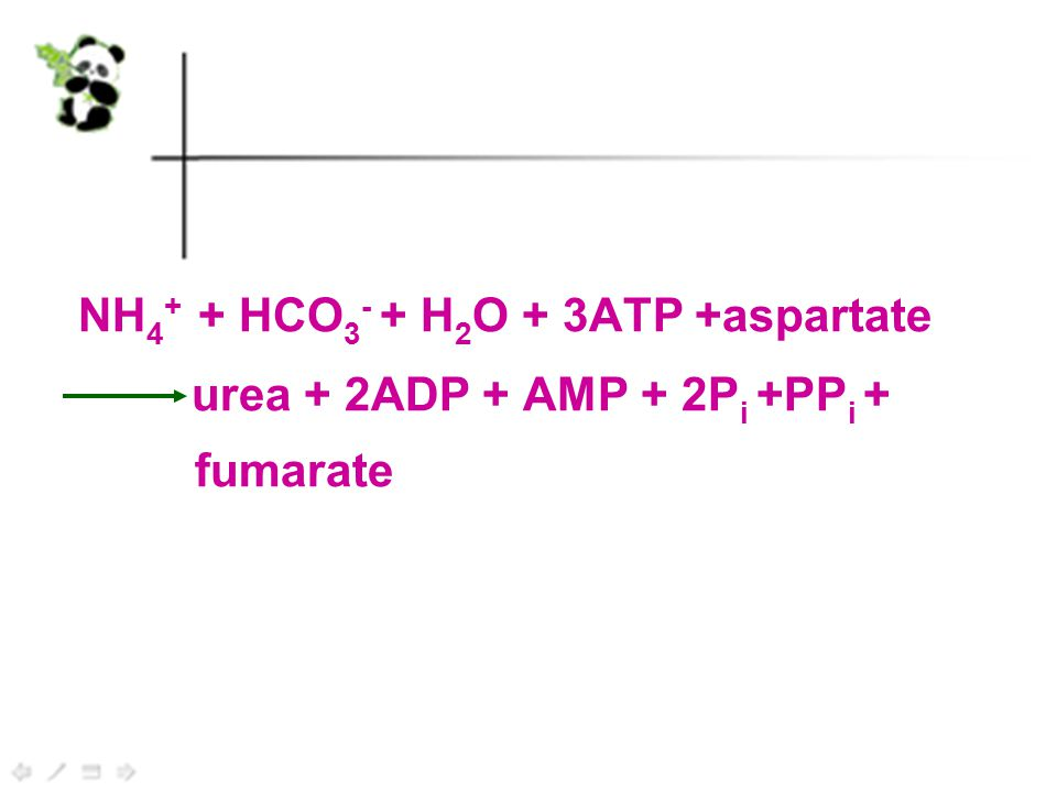 NH 4 + + HCO 3 - + H 2 O + 3ATP +aspartate urea + 2ADP + AMP + 2P i +PP i + fumarate