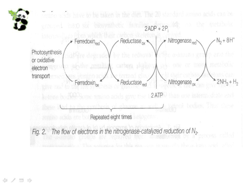 nitrogenase 铁氧还蛋 白