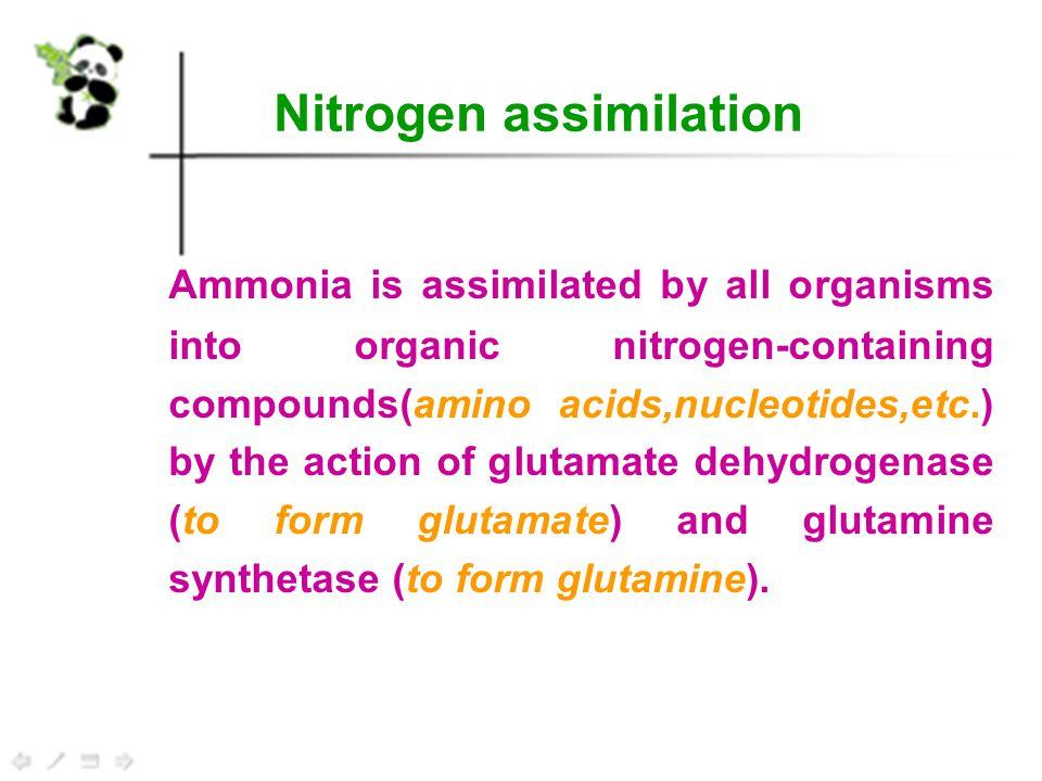 Amino acid family