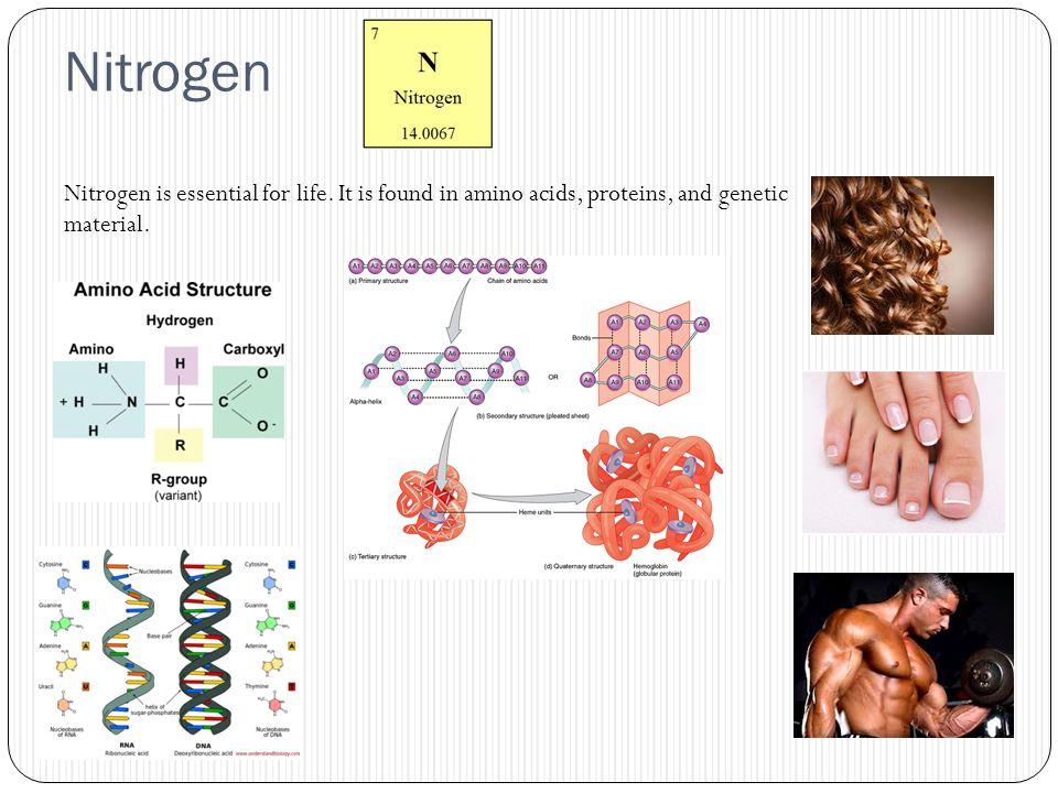 Nitrogen Nitrogen is essential for life.