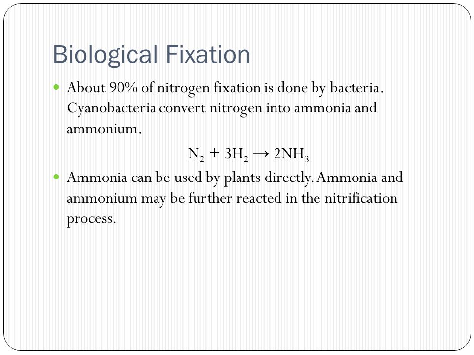 Biological Fixation About 90% of nitrogen fixation is done by bacteria.