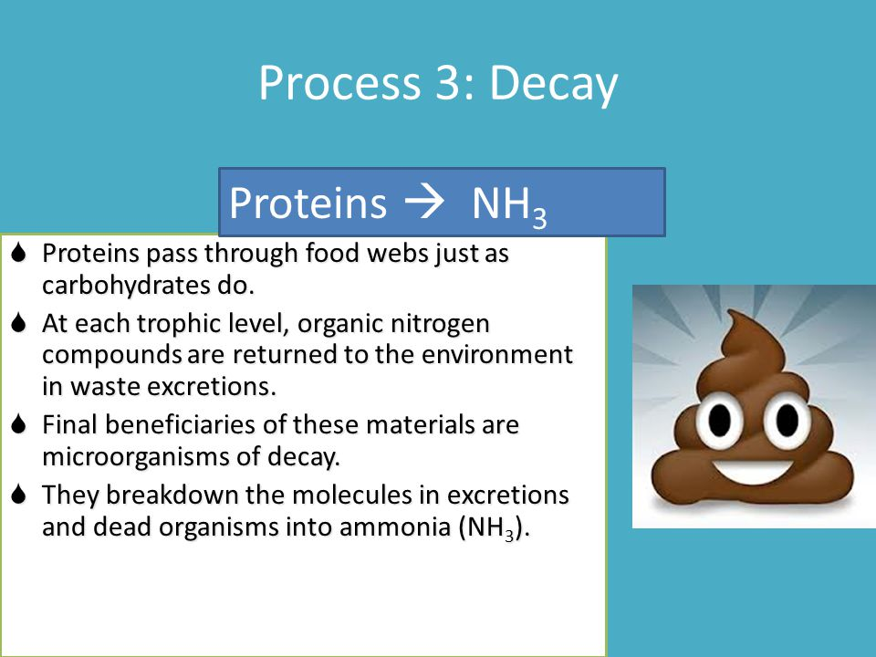 Process 3: Decay  Proteins pass through food webs just as carbohydrates do.  At each trophic level, organic nitrogen compounds are returned to the e