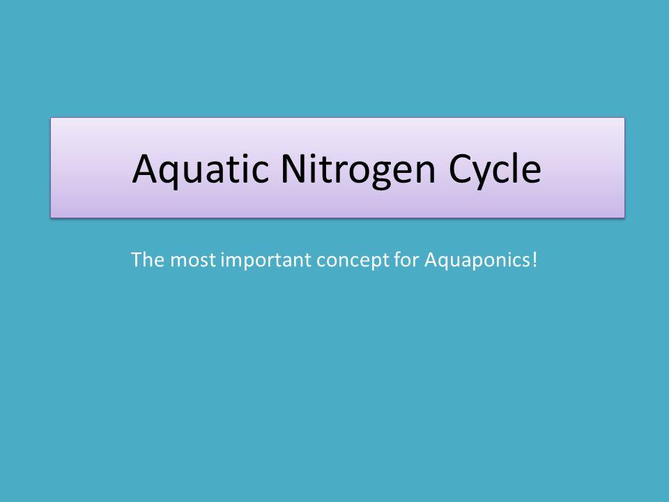 Aquatic Nitrogen Cycle The most important concept for Aquaponics!