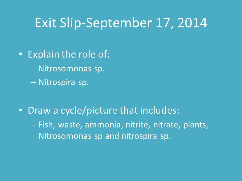 Exit Slip-September 17, 2014 Explain the role of: – Nitrosomonas sp. – Nitrospira sp. Draw a cycle/picture that includes: – Fish, waste, ammonia, nitr