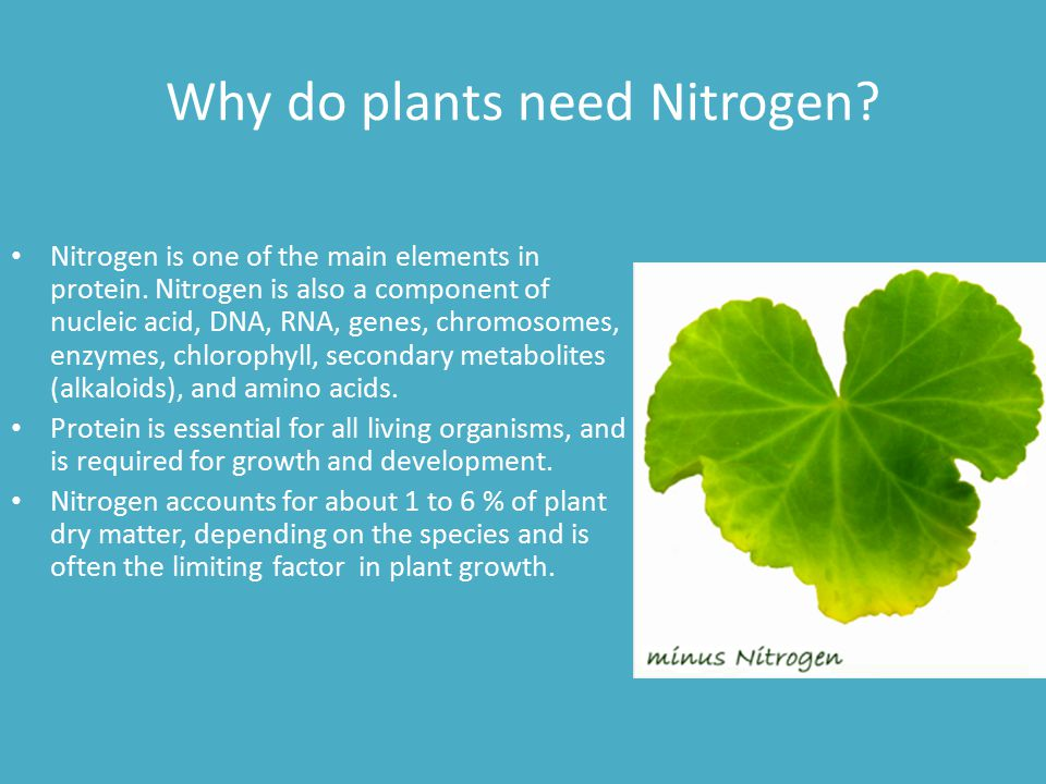 Why do plants need Nitrogen? Nitrogen is one of the main elements in protein. Nitrogen is also a component of nucleic acid, DNA, RNA, genes, chromosom