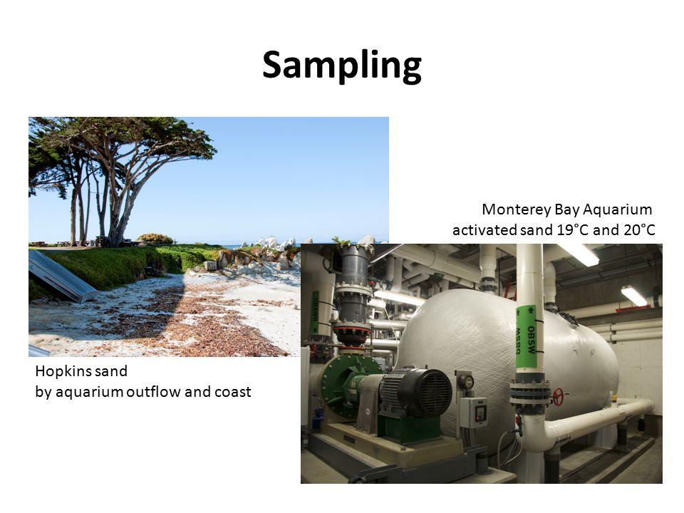Sampling Monterey Bay Aquarium activated sand 19°C and 20°C Hopkins sand by aquarium outflow and coast