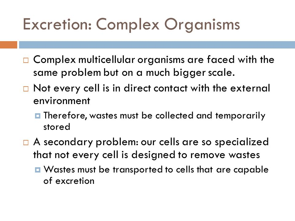 Excretion: Complex Organisms  Complex multicellular organisms are faced with the same problem but on a much bigger scale.  Not every cell is in dire