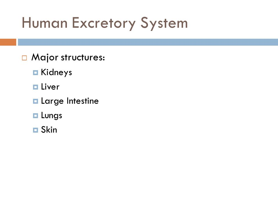 Human Excretory System  Major structures:  Kidneys  Liver  Large Intestine  Lungs  Skin