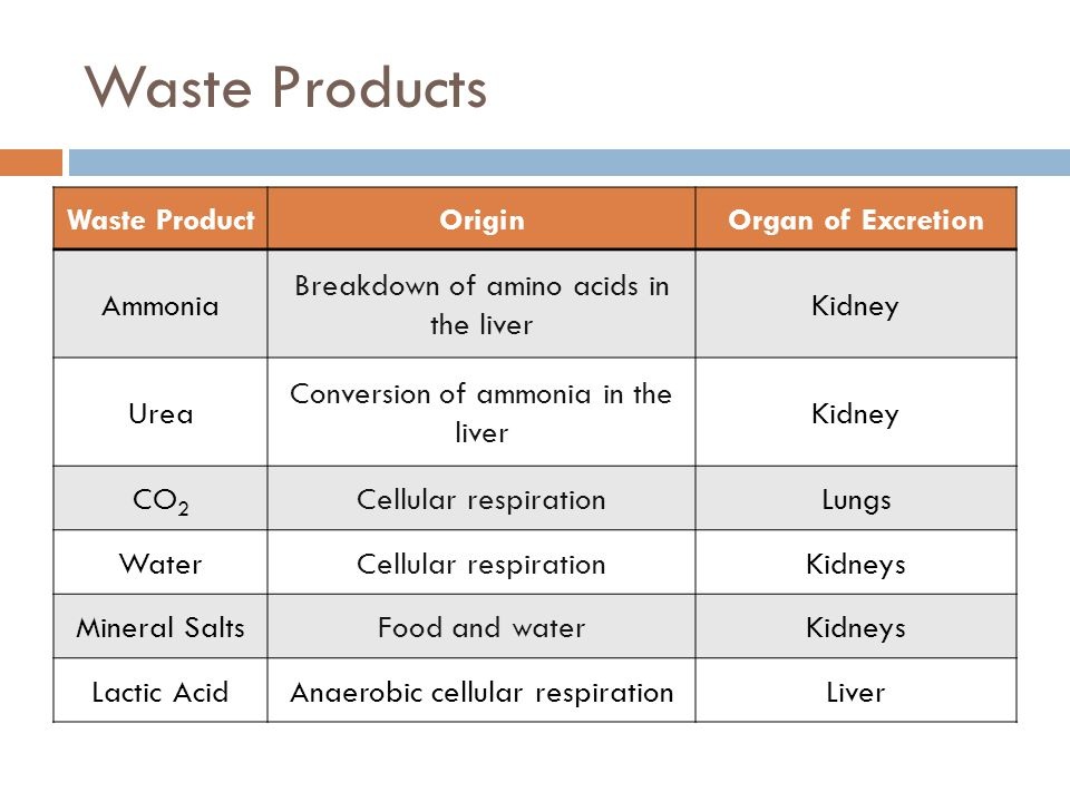 Waste Products Waste ProductOriginOrgan of Excretion Ammonia Breakdown of amino acids in the liver Kidney Urea Conversion of ammonia in the liver Kidn
