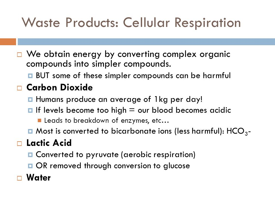 Waste Products: Cellular Respiration  We obtain energy by converting complex organic compounds into simpler compounds.  BUT some of these simpler co