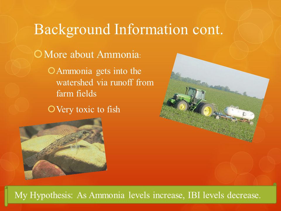Background Information cont. My Hypothesis: As Ammonia levels increase, IBI levels decrease.
