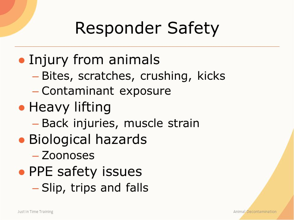 Responder Safety ●Injury from animals – Bites, scratches, crushing, kicks – Contaminant exposure ●Heavy lifting – Back injuries, muscle strain ●Biolog