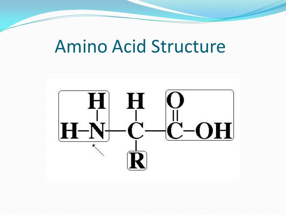 Amino Acid Enzymes Cysteine desulfhydrase Cysteine Hydrogen Sulfide + ammonia + Pyruvic acid