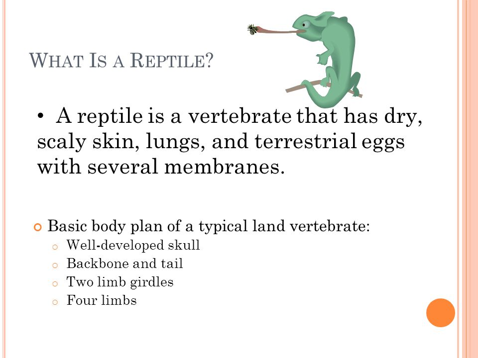 A reptiles skin helps prevent losing the body's water in dry environment but it doesn't grow along with the rest of the reptile so they periodically shed their skin Reptiles are widely distributed on Earth, the only places reptiles cannot live is in very cold areas.