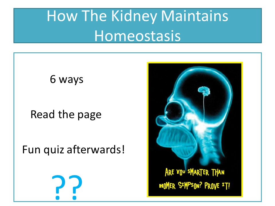 How The Kidney Maintains Homeostasis 6 ways Read the page Fun quiz afterwards! ??
