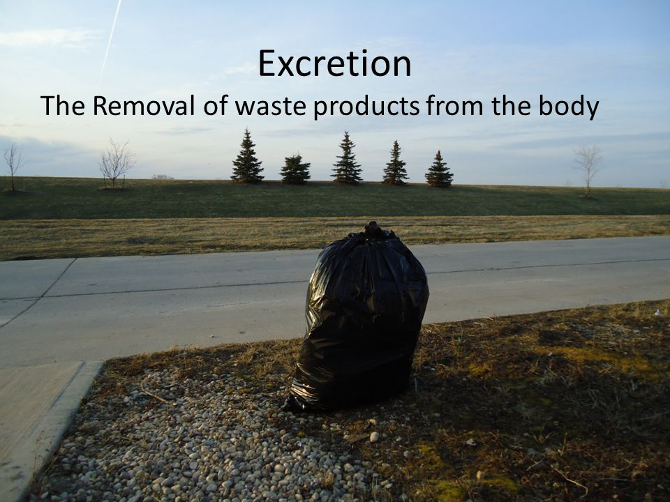 Excretion The Removal of waste products from the body