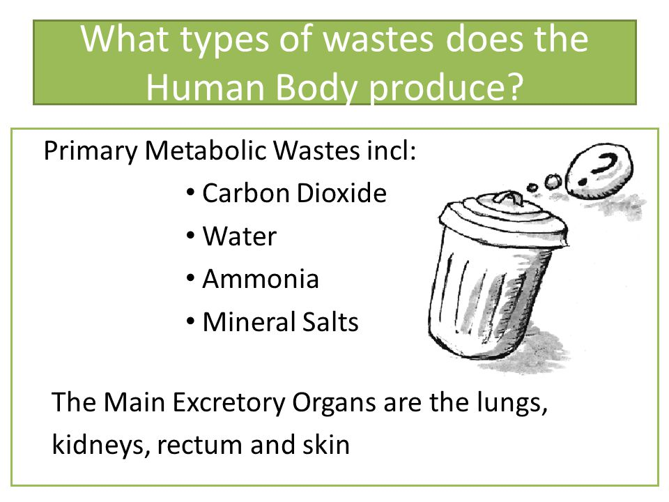 Some Major Organs and their waste products OrganPrimary WasteSecondary Waste KidneyUrine through water, N 2 wastes, salts Carbon dioxide, Heat RectumFood wastes, bacteria Feces Carbon dioxide, heat, water, salts, and methane.