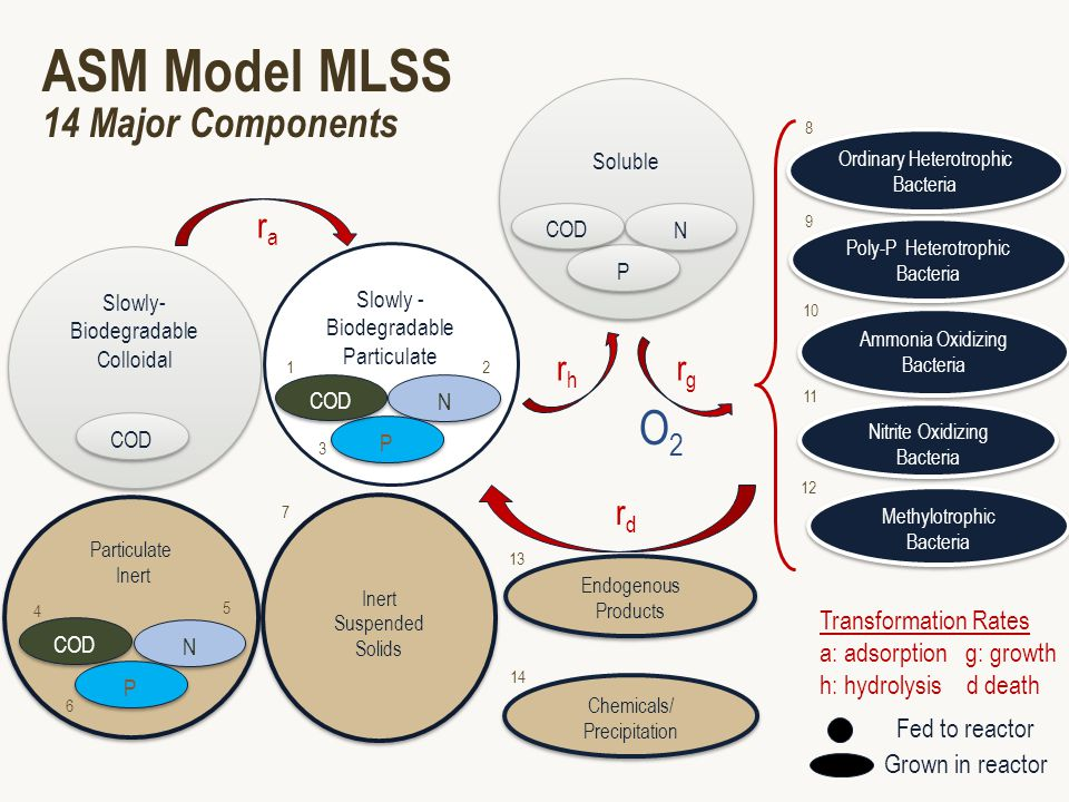 ASM Model MLSS 14 Major Components Ordinary Heterotrophic Bacteria Ammonia Oxidizing Bacteria Nitrite Oxidizing Bacteria Endogenous Products Endogenous Products Slowly- Biodegradable Colloidal COD Particulate Inert Particulate Inert N N P P COD Inert Suspended Solids Inert Suspended Solids rara rhrh rgrg Soluble N N P P COD rdrd Chemicals/ Precipitation Chemicals/ Precipitation Methylotrophic Bacteria Methylotrophic Bacteria Transformation Rates a: adsorption g: growth h: hydrolysis d death Poly-P Heterotrophic Bacteria Slowly - Biodegradable Particulate N N P P COD 2 3 4 5 6 7 8 10 9 12 11 14 13 1 Fed to reactor Grown in reactor O2O2