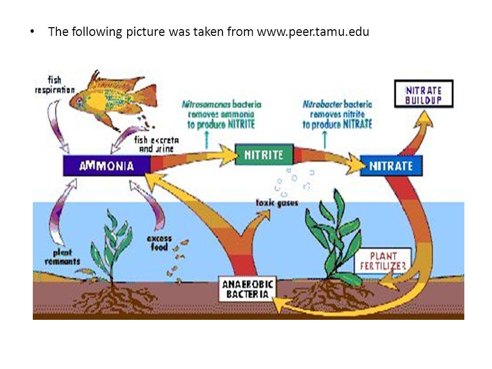 The following picture was taken from www.peer.tamu.edu