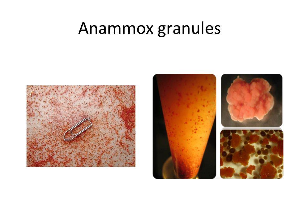 Anammox granules