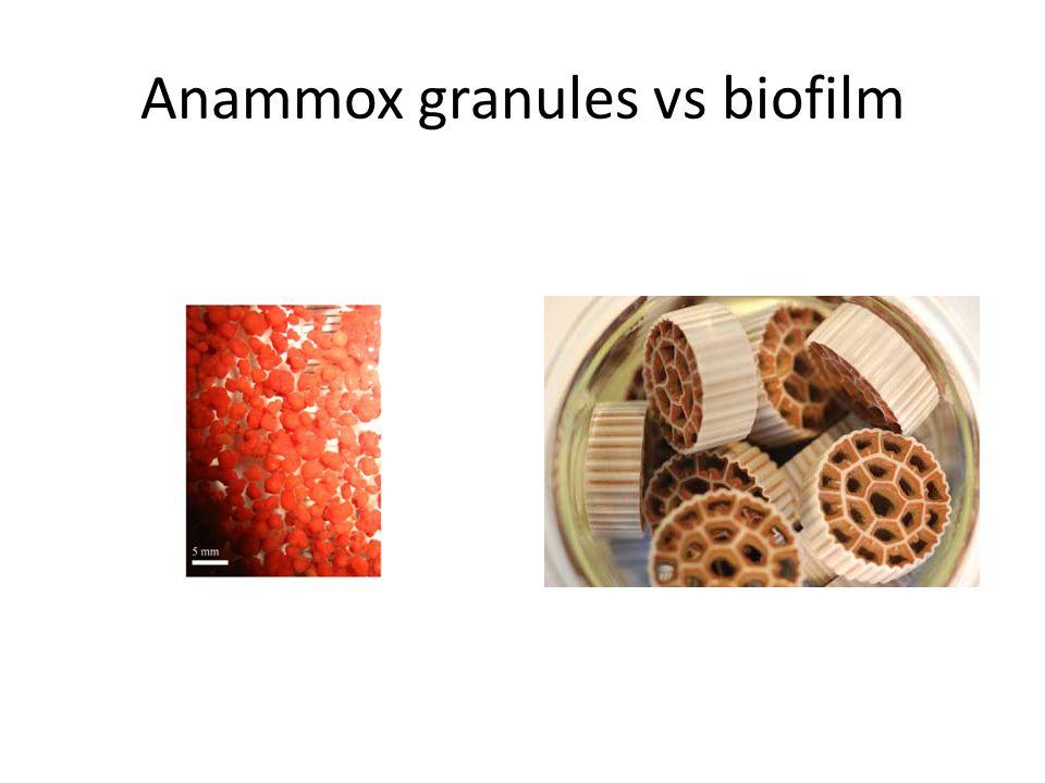 Anammox granules vs biofilm