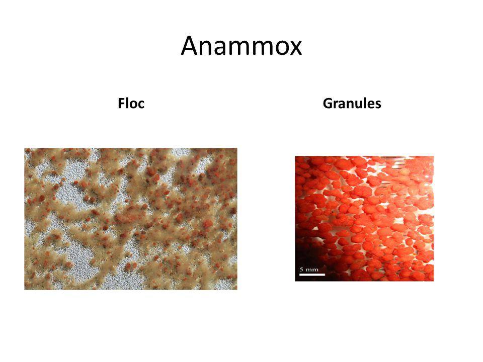 Anammox FlocGranules