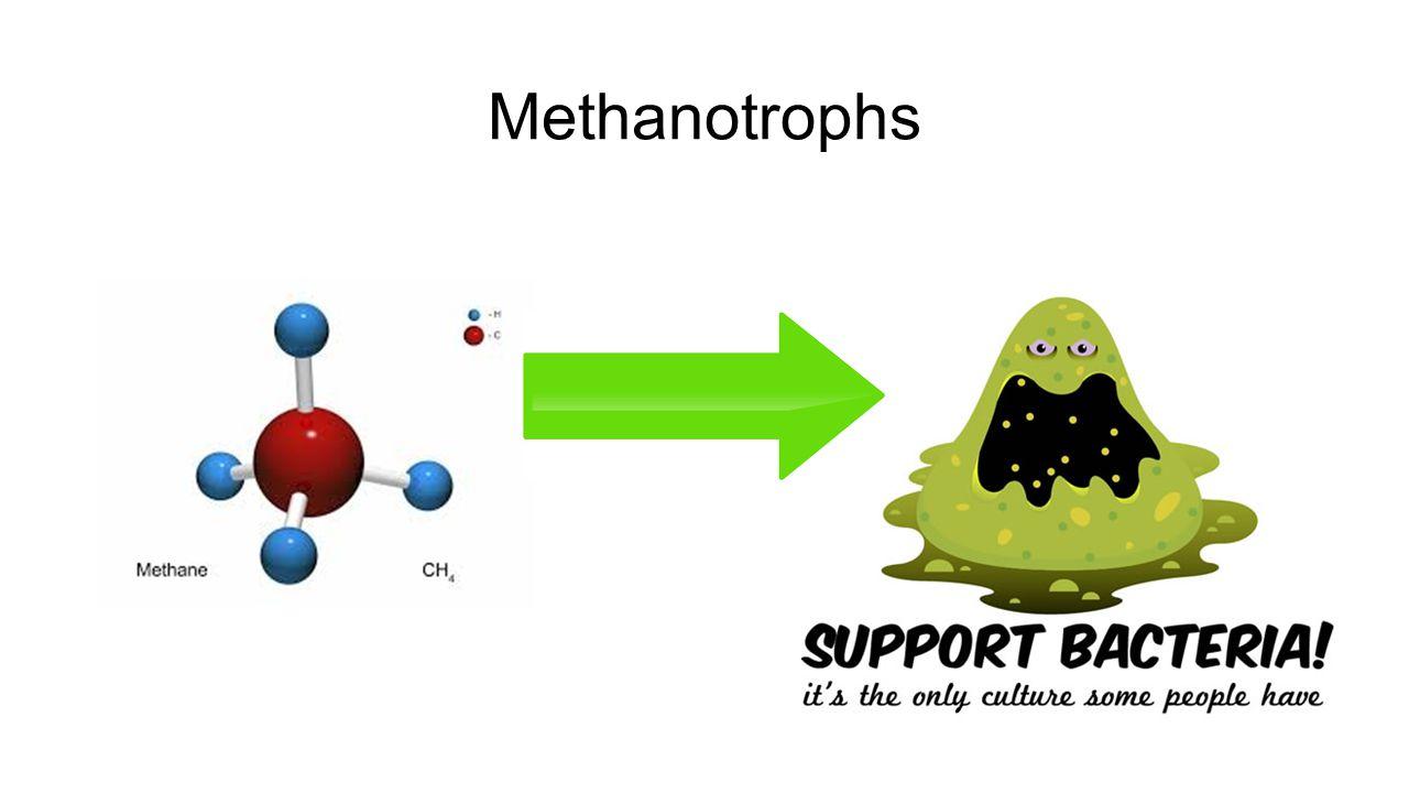 Methanotrophs